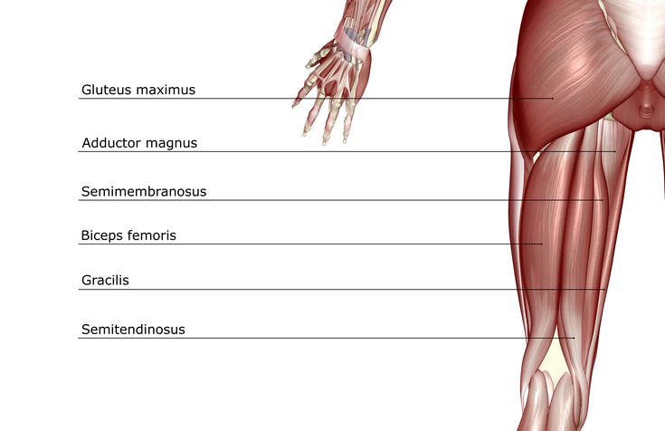 hamstring muscles exercises