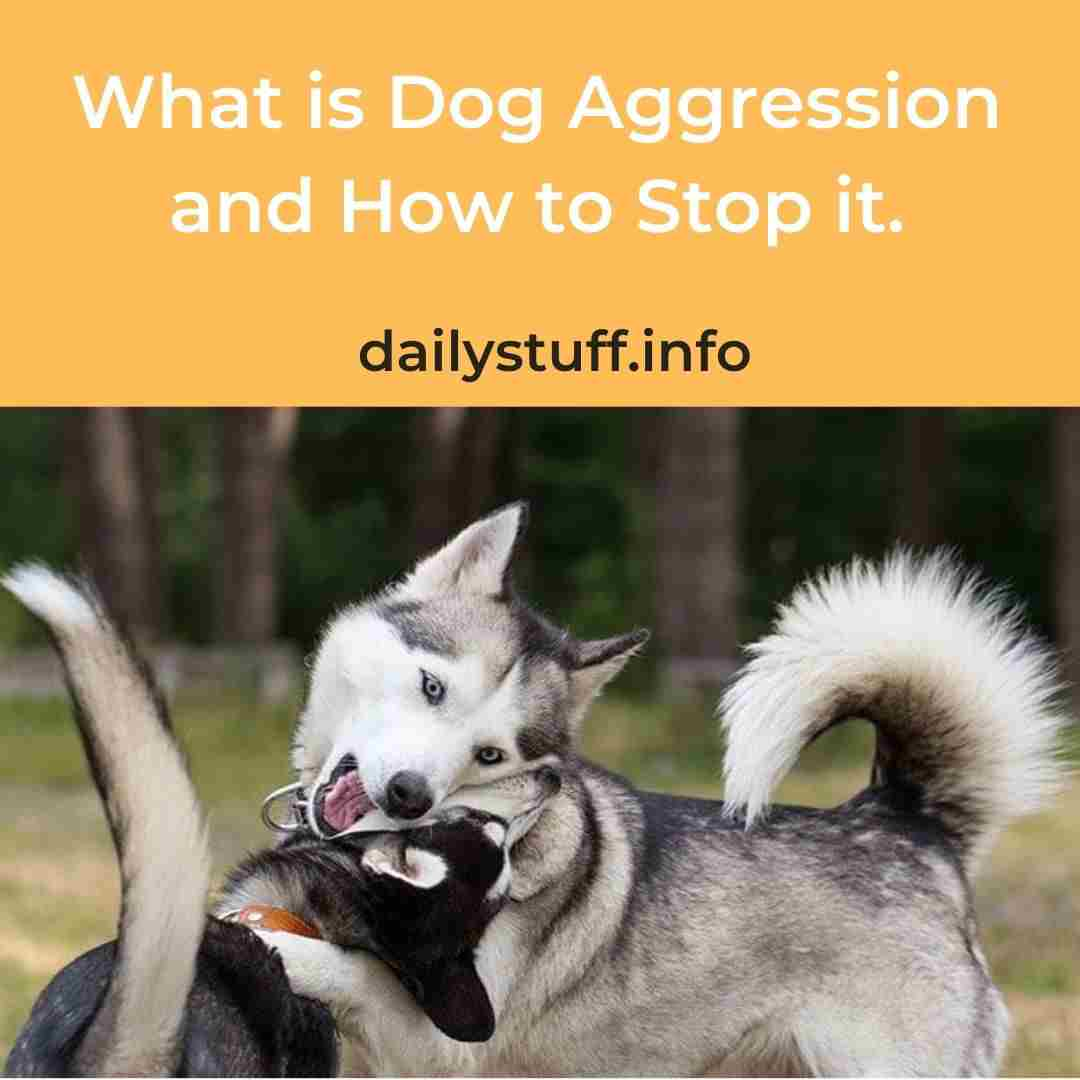 What is Dog Aggression and How to Stop it.