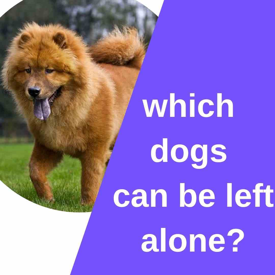 which dogs can be left alone